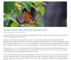 http://www.emeraldcoastfl.com/discover-the-coast/emerald-postings-blog/monarch-butterflies-along-the-emerald-coast/?cat=