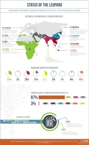 leopard, infographic, nature, science